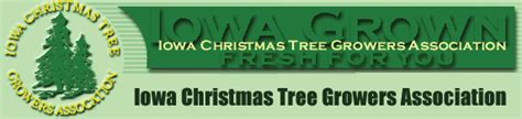 iowa christmas tree growers