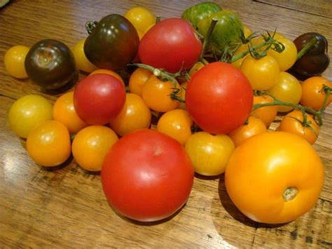color tomato different types of tomato varieties for growing