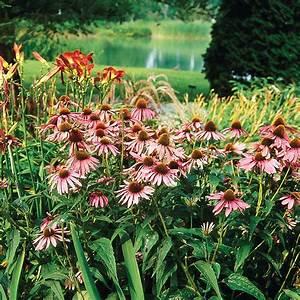 Quand Tailler Les Arbustes De Haies : fleurs de jardin vivaces ~ Dode.kayakingforconservation.com Idées de Décoration