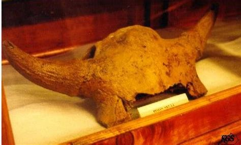 mammalia fossils kentucky geological survey university