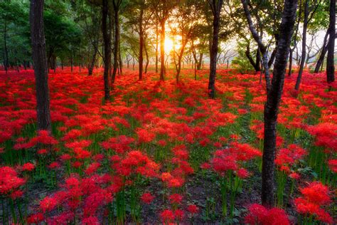 beautiful nature wallpaper flowers wallpapersafari