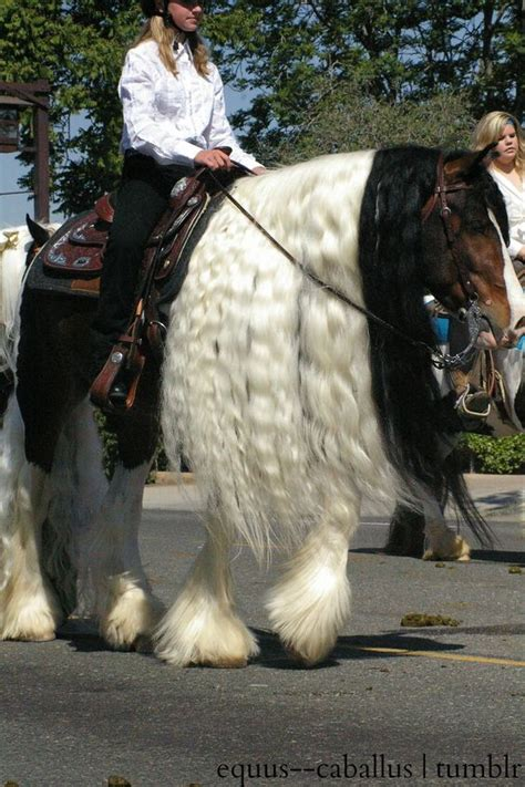 horses animals very calm intelligent clydesdale horse breeds scare powerful animal