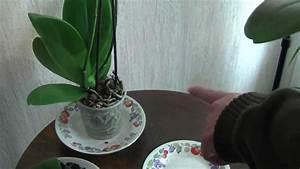 Comment Soigner Une Orchidée : comment faire refleurir vos orchid es youtube ~ Farleysfitness.com Idées de Décoration