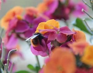 Welche Blumen Für Bienen : summender balkon w rden bienen blumen kaufen die haselmaus ~ Eleganceandgraceweddings.com Haus und Dekorationen