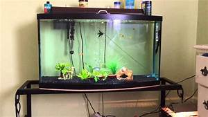 How To Take Care Of Angelfish And What Size Tank You Need
