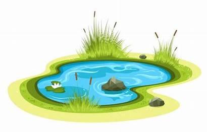 Pond Cartoon Garden Clipart Rock Illustrations Clip