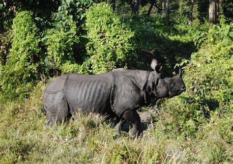 habitat hilang akankah badak bertahan hidup di muka bumi mongabay co id