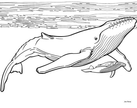 printable humpback whale coloring pages animal