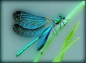 la libellule chante et danse la vie