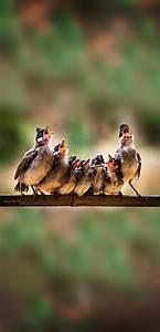 Bird Chorus, Bird Choir, Hungry Birdies, Baby Birdies ...