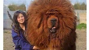Big Dog Breeds Woman Related Keywords - Big Dog Breeds ...