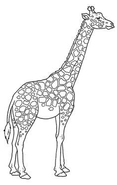 21+ Exclusive Picture of Giraffe Coloring Pages (With