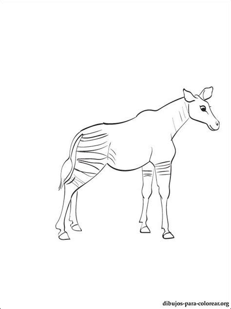 dibujo de okapi  colorear  pintar dibujos  colorear
