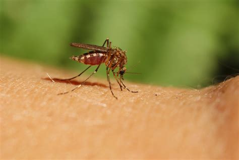 what is about mosquitoes how to avoid mosquitoes and ticks this summer mass gov blog