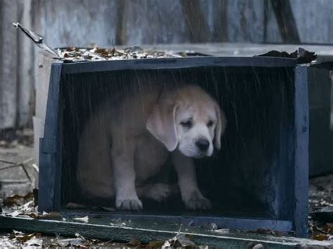budweiser lost dog finds   top  super bowl ad meter