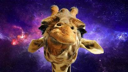 Giraffe Space Animals