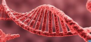 Doctor Lab  Medtech   Dna  U0e15 U0e2d U0e19 U0e17 U0e35 U0e48 1   Dna  U0e04 U0e37 U0e2d U0e2d U0e30 U0e44 U0e23  U0e41 U0e25 U0e30