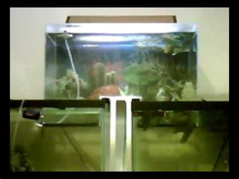 connect two fish tanks alternative fill method diy