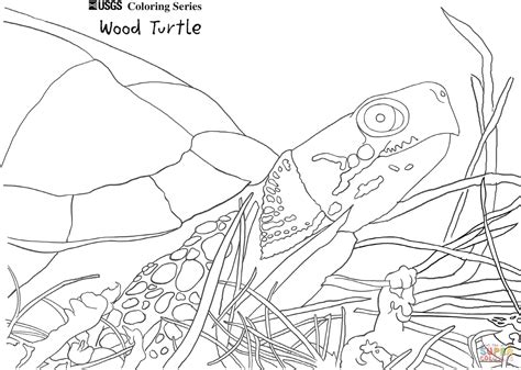 wood turtle coloring page  printable coloring pages