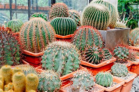 Cactus & Succulent Care - A & P Nursery