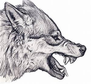 wolf | silvercrossfox