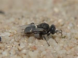 Wie Vertreibe Ich Wespen : naturspaziergang wissenswertes ber wespen teil 2 ~ Orissabook.com Haus und Dekorationen