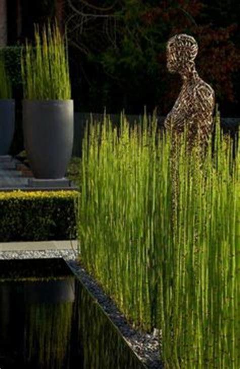 haie de bambous en pots ext 233 rieur gardens