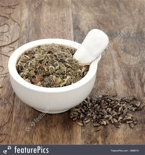 Blessed And Milk Thistle Herb Stock Photo I4888731 At