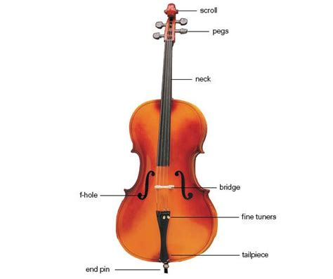 Diagram Of Violin Part by 9 Best Instrument Diagrams Images On Musical