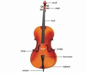 Cello Diagram