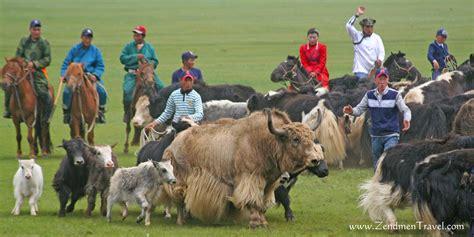 Yak Stock Photo. Image Of Wildlife, Wool, Hair