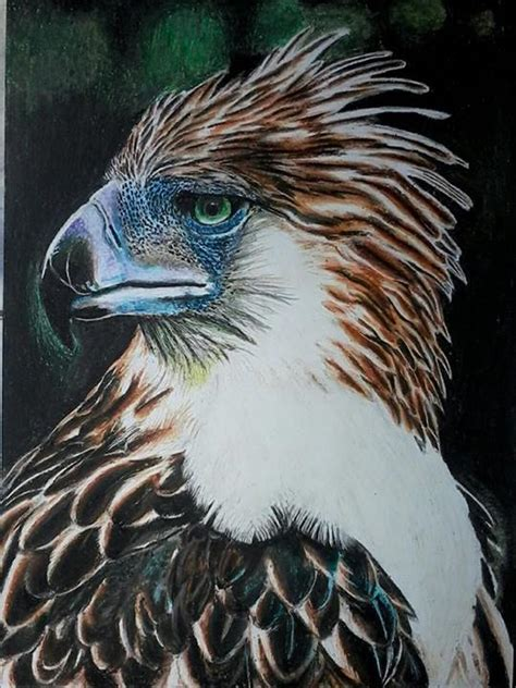 philippine eagle drawing  getdrawings