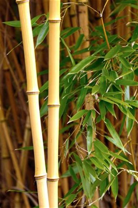 bamboo profitable plants digest