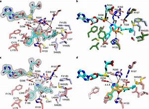 Crystal Structure Of The Lepi Pseudo Enzyme U2013substrate