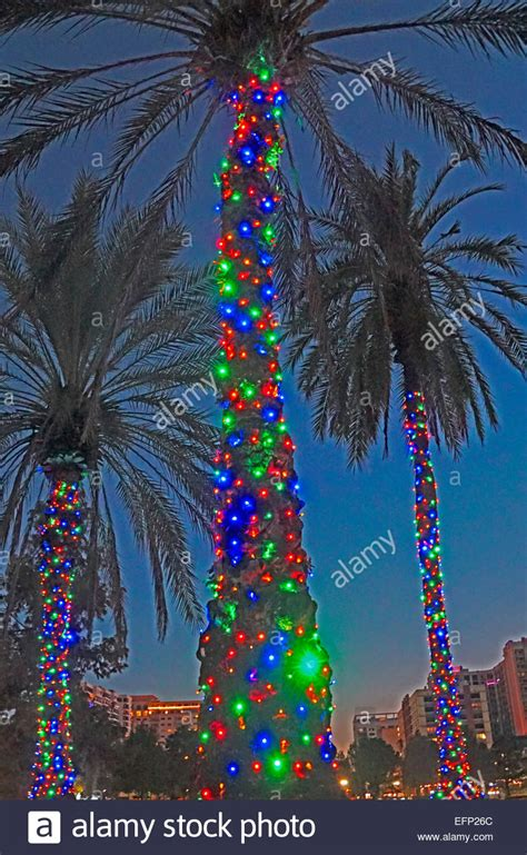 christmas decorated palm tree in orlando florida stock