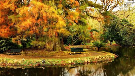 Foggy Evergreen Forest Wallpaper Autumn Rest On The Bench Wallpaper