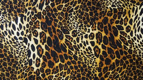 Animal Print Hd Wallpaper - leopard print wallpapers hd pixelstalk net