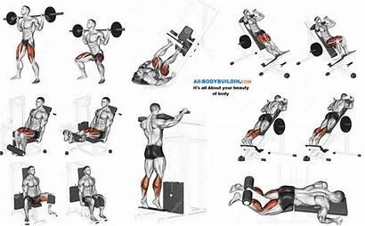 Leg Exercises Quads Bodybuilding Exercise Legs Calves
