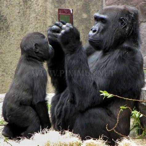 Animals With Human Behavior Animals