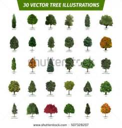 mesquite tree stock images royalty free images vectors