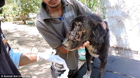 kalu  dog regrows  face