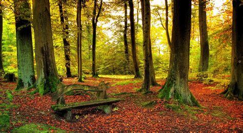 beautiful forest autumn beautiful forest desktop wallpaper hd wallpaper pic