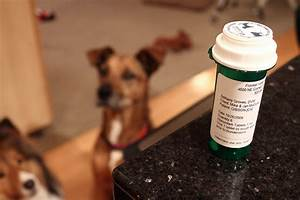 herbal reme s for anxiety prone pooches