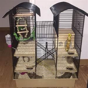 Was Braucht Man Für Alexa : wie viel gitter abstand braucht man f r ein teddy hamster ~ Jslefanu.com Haus und Dekorationen