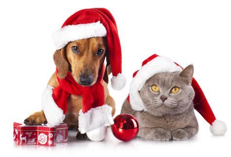tips     pets safe  christmas