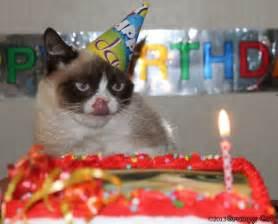 grumpy cat birthday white wolf happy birthday grumpy cat
