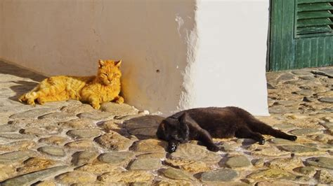 Spanish Town Gives Human Rights To Dogs And Cats Cattime