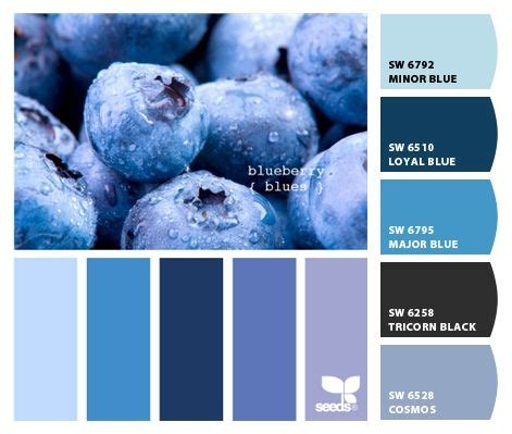 from 2 5 12 quot blueberry tones quot design seeds to paint colors from chip it by sherwin williams