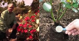 Rosen Schneiden Frühling : rosen im fr hjahr rosen schneiden und weitere tipps f r den fr hling ~ Watch28wear.com Haus und Dekorationen