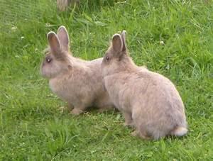 Was Ist Bei Kopfstützen Zu Beachten : was ist im winter bei au enhaltung von kaninchen zu beachten ~ Orissabook.com Haus und Dekorationen